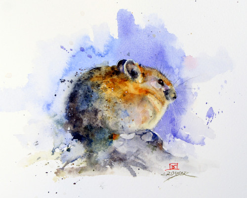 'PIKA' wildlife art from an original painting by Dean Crouser. Available in a variety of products including signed and numbered limited edition prints, ceramic tiles and coasters, greeting cards and more.
