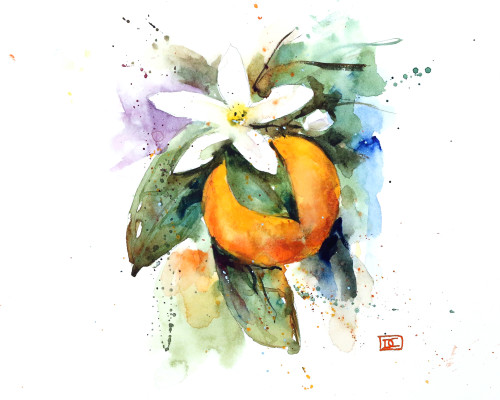 'ORANGE BLOSSOM' floral watercolor art from an original painting by Dean Crouser. Available in a variety of products including signed and numbered limited edition prints, ceramic tiles and coasters, greeting cards and more.