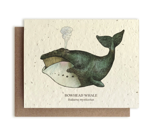 Card, plantable paper, Whale, The Bower Studio