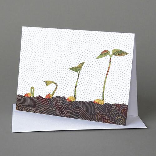 CARD seedlings  Carve Designs