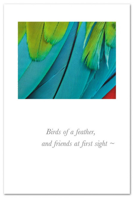 CARD BD PARROT FEATHERS
