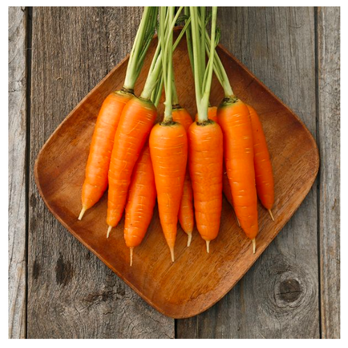 2020 SEEDS, CARROTS, DANVERS 126
