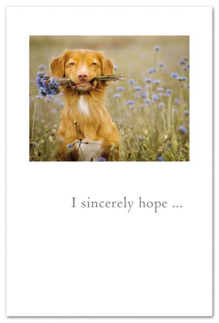 I sincerely hope...