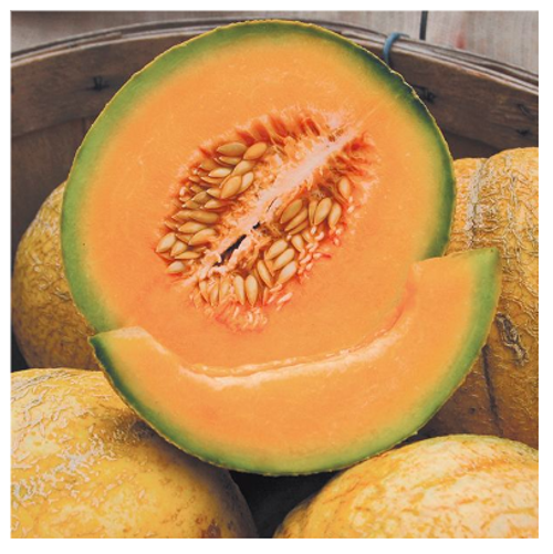 2020 SEEDS, MELON, PMR DELICIOUS 51 MUSKMELON