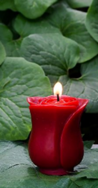 CANDLE-PETITE ROSE- BEESWAX, Sunbeam - Each