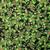 Early Christmas - 100% Cotton - Prints and Fat Quarter Bundle