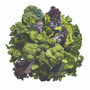Perricone MD Super Greens - Ingredients