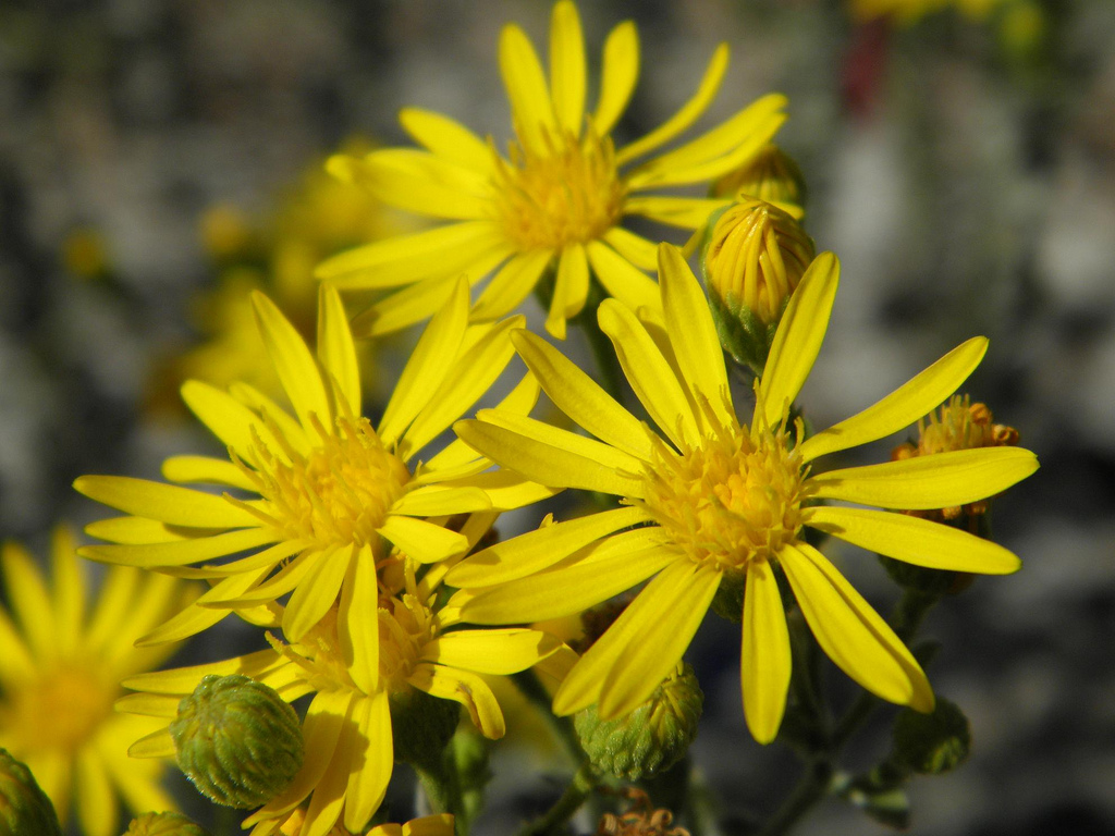 florida-golden-aster-miami-tours.jpg