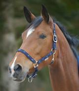 TT -Waldhausen Esperia Little Horses Halter - NAVY