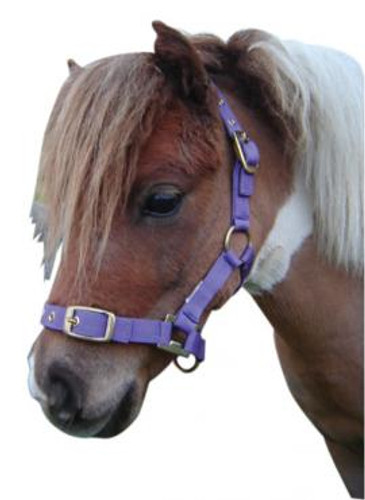 Miniature Nylon Halter