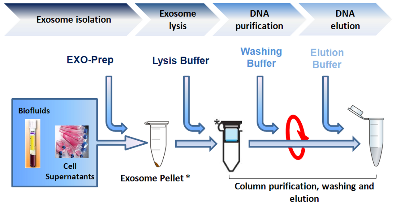 Isolation of circulating and Exosome associated genomic DNA from urine and  cell culture media (40 reactions)