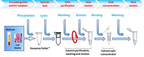 Isolation of circulating and EV-associated DNA from plasma and serum (40 reactions)