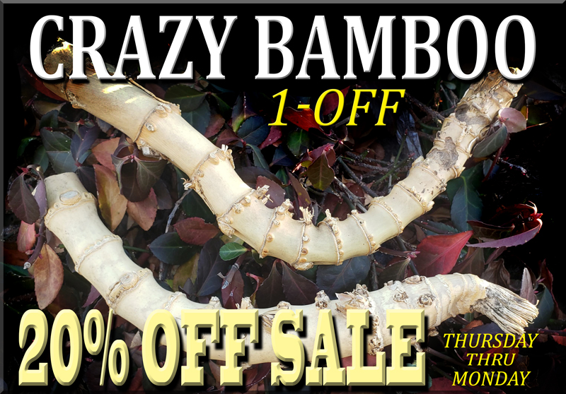 Crazy Bamboo