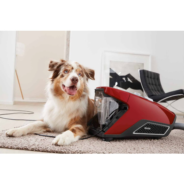 MIELE BAGLESS CX1 BLIZZARD CAT AND DOG - Bare Floors, Wall to Wall Carpets, Thick Rugs And Pets.