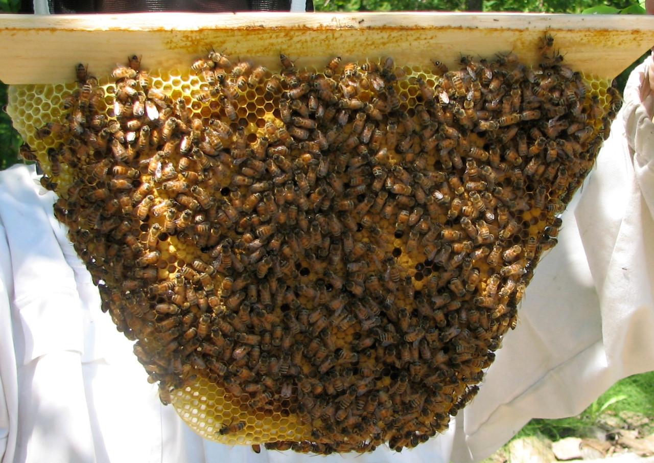 Natural Beekeeping in Top Bar Hives: Nov 16-17 2019