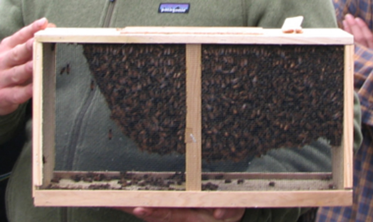 That's a very healthy package of live bees.