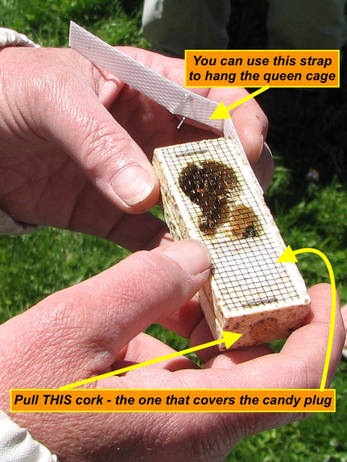 There's a queen cage inside of every 3 pound package of honey bees for sale at Gold Star Honeybees