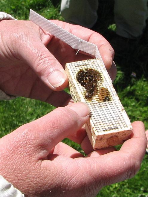 There's a queen cage inside of every 3 pound package of honey bees for sale at Gold Star Honeybees.  There will be attendant bees in each cage with her to care for her during transit.