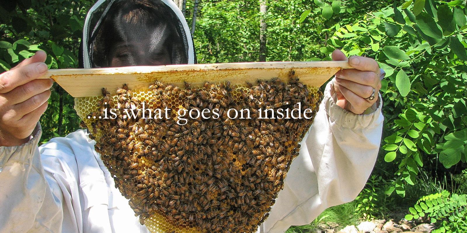 Top bar hives mean clean, natural beeswax!