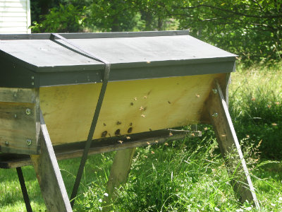 Year Two in your Top Bar Hive – What if your bees lived?