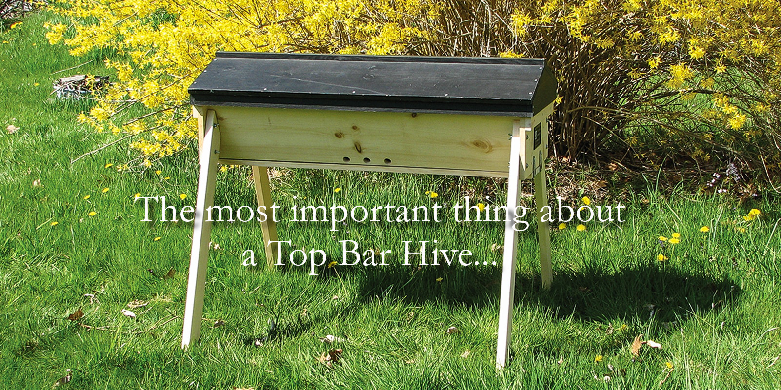 The most important thing about a top bar hive.