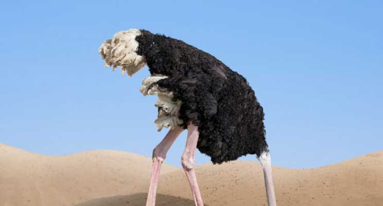 Cyber Security- The Ostrich Approach is hurting the world