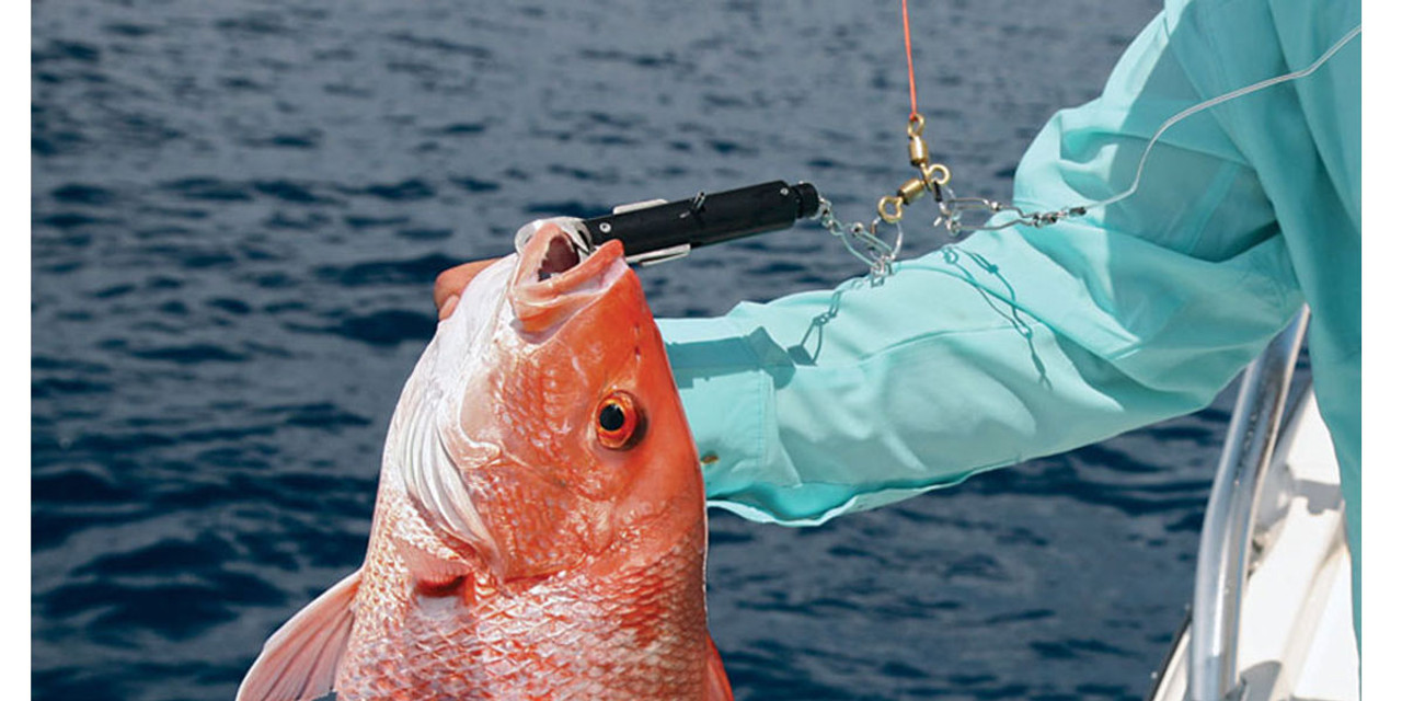 SeaQualizer Red Snapper Release with George Poveromo
