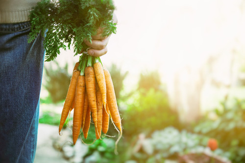 Certified Organic Carrots - Bunched (Each approx 5 - 8 pcs)