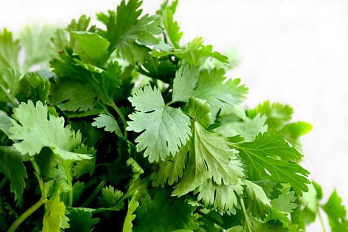 Certified Organic Cilantro Bunch (each)