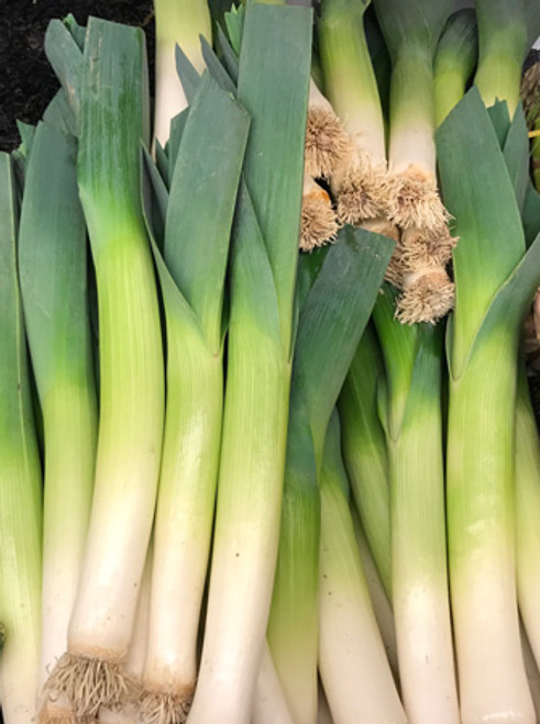 Certified Organic Leeks (1 pc approx. 200g)