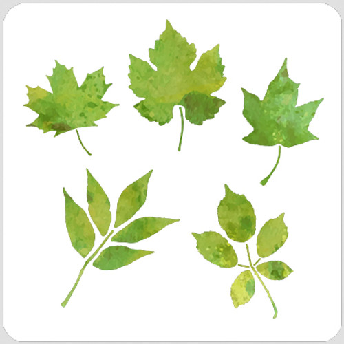 018122 - Leaf Set 1