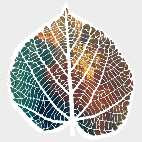 019209 - Skeleton Leaf