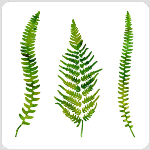 020184 - Ferns