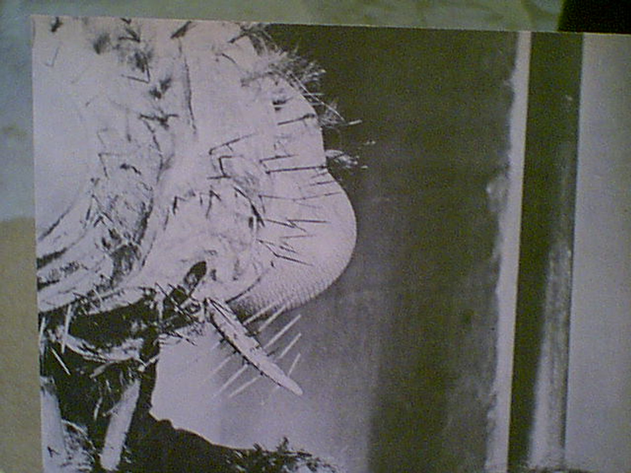 Price, Vincent Return Of The Fly Photo Signed Autograph Movie Scene