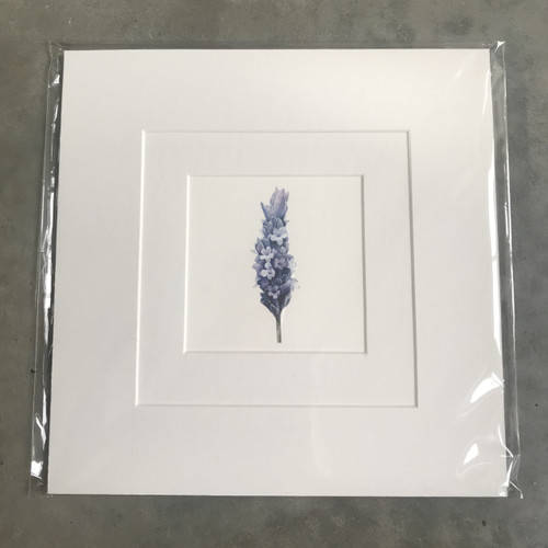 Father Rabbit Print - Lavender, Mounted Ready for Frame
