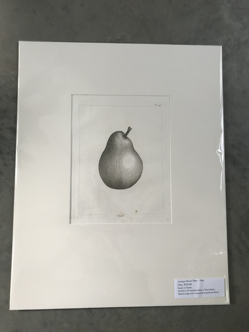 French Antique Book Plate, Pear No. 2 - Mounted Print
