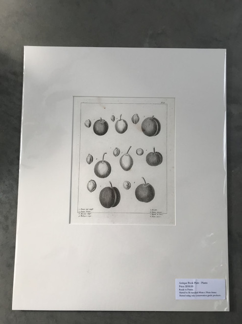 French Antique Book Plate, Plums No. 2 - Mounted Print