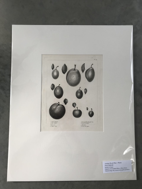 French Antique Book Plate, Plums No. 1 - Mounted Print