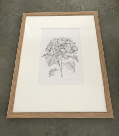 Original Pencil Sketch - Hydrangea – Framed Artwork