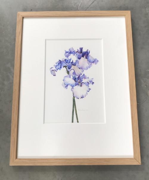 Original Watercolour - Tall Bearded Irises – Framed Artwork