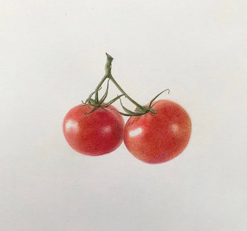 Original Pencil Drawing - Tomatoes in Colour - Mounted Artwork