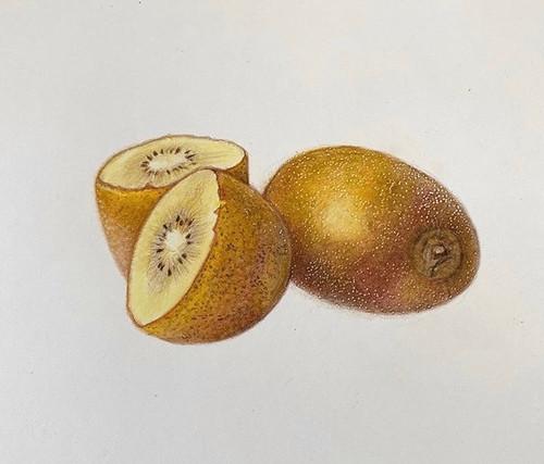 Original Pencil Drawing - Kiwi Fruit - Mounted Artwork