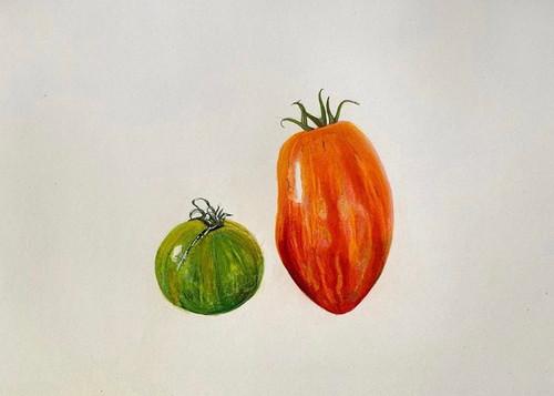 Original Pencil Drawing - Tomato Duo - Mounted Artwork