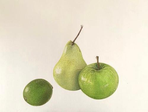 SOLD Original Pencil Drawing - Green Fruit Trio - Mounted Artwork