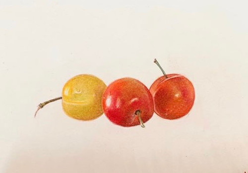 Original Pencil Drawing -Crab Apple Trio - Mounted Artwork