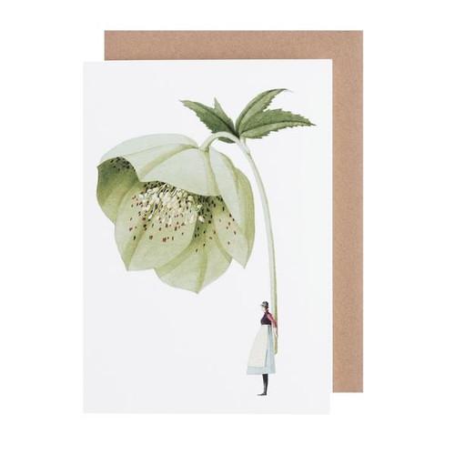 Laura Stoddart - GREETINGS CARD - HELLEBORE