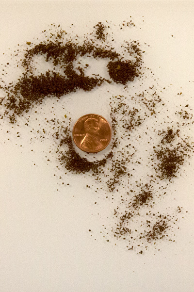 image of penny and fine grinds to demonstrate grind size