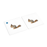 Mammals Matching Cards (IT-0012)