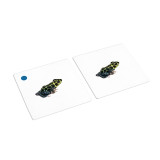 Amphibian Matching Cards (IT-0016)