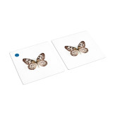 Butterflies Matching Cards (IT-0025)